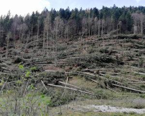 Il vento devasta i boschi dell'Orienteering